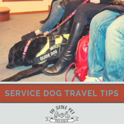 What You Need to Know When Traveling by Plane With A Service Dog