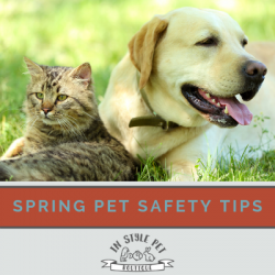 Simple Pet Safety Tips To Be Aware Of This Springtime