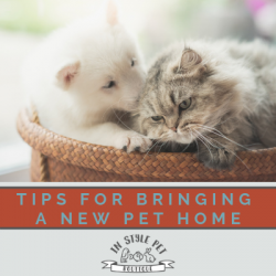 Tips For Bringing a New Pet Home