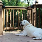 Outdoor Safety Gate - Aluminum Gate