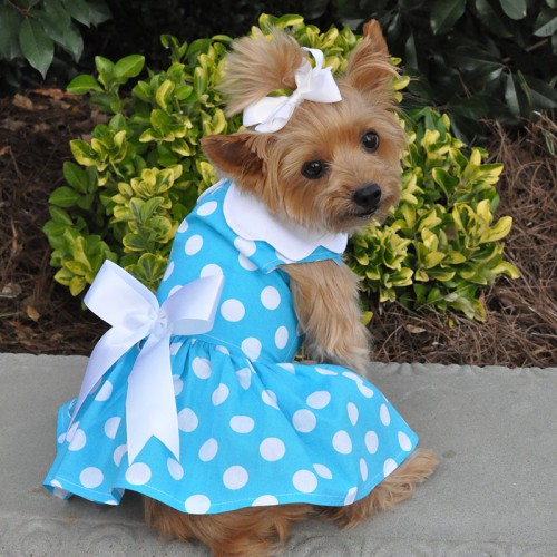 Blue Polka Dot Dress with Leash D-Ring